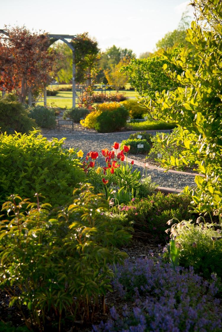 Gardens SPRING 2017-2793